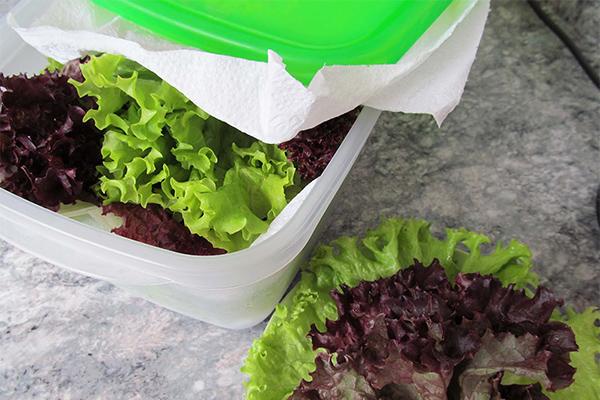 consumir mais legumes e verduras no jantar - lave as folhas e armazene
