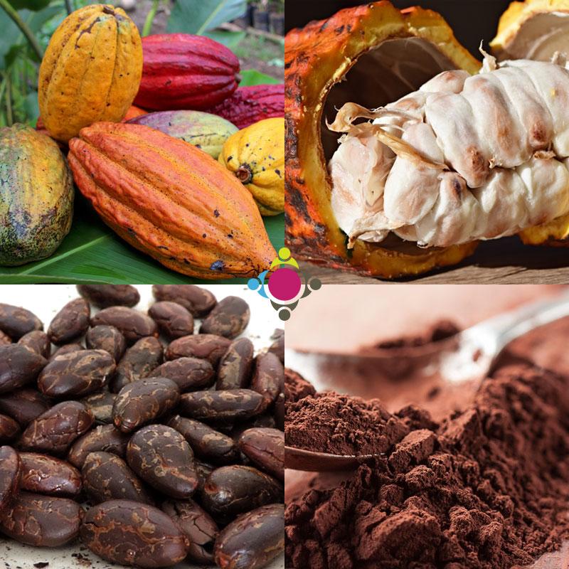 escolher um bom chocolate - fabricação do chocolate